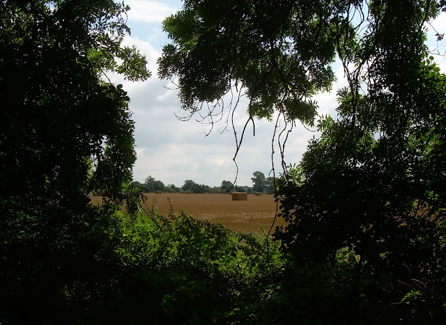 View from a copse near the River Cam south of Orwell