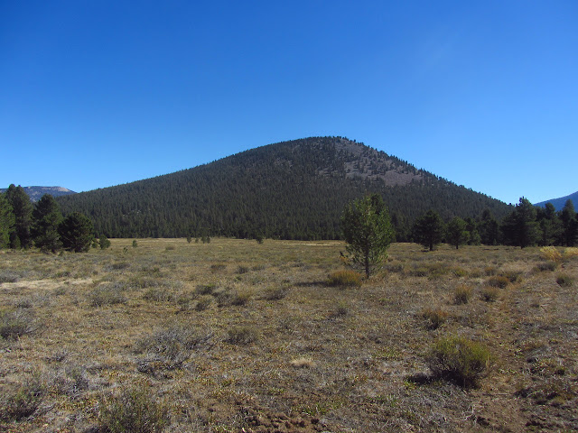tree covered cinder cone