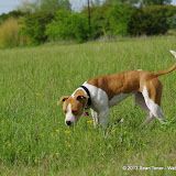 2013 Spring Flora & Fauna - IMGP6319.JPG