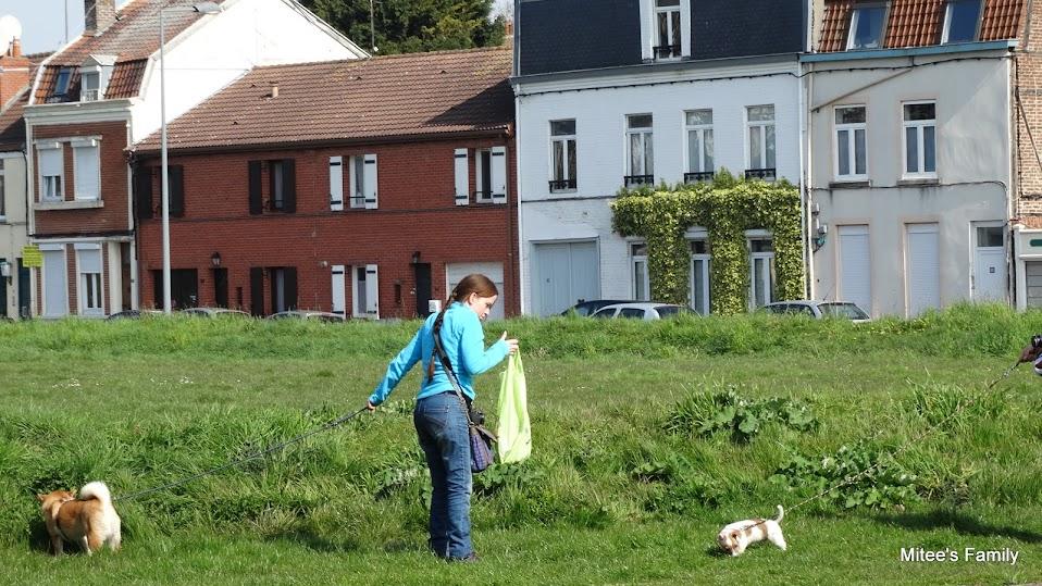 Balades canines en Nord (59)/Pas de Calais (62) - Boulogne-sur-Mer, Calais et Lille - Page 4 DSC01786