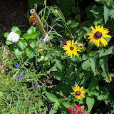Gardening 2010, Part Three - 101_4855.JPG