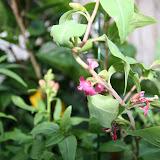 Gardening 2012 - IMG_2718.JPG