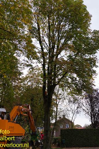 Bomen gekapt Museumlaan in overloon 20-10-2014 (11).jpg