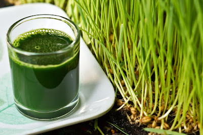 35 Amazing Wheatgrass Benefits for Health Hair and Beauty