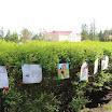 Выставка на прищепках детских рисунков по произвед Чехова.JPG