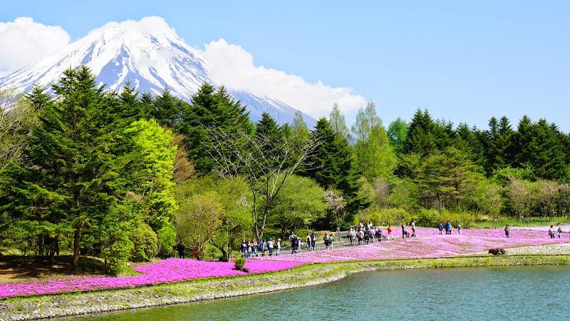 富士芝桜まつり 写真15