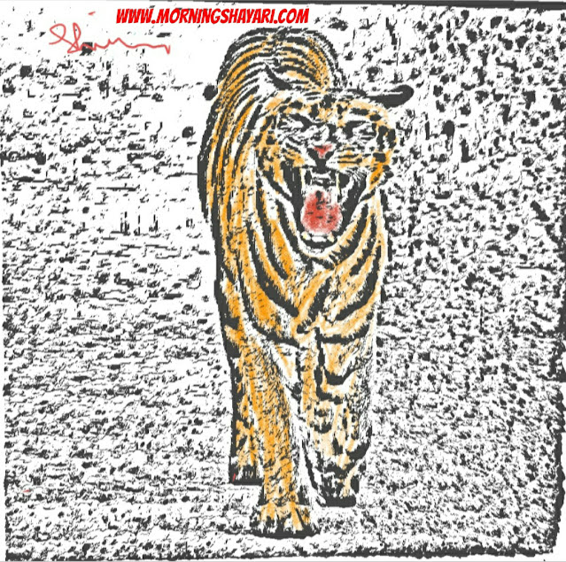Nature Sketches, Nature Photography, Tiger, Bengal Tiger, wild Animal. Jungle King, Asiatic lion, Cat Family, amazon Forest