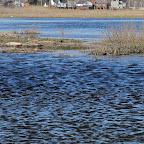 Река Усманка весенний паводок 017.jpg