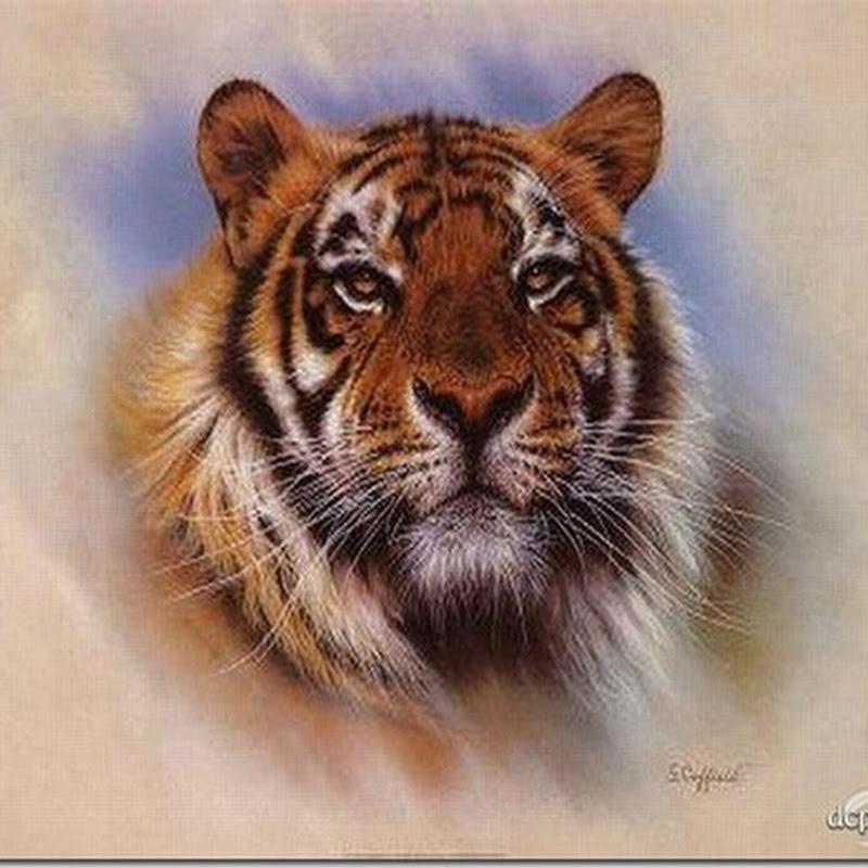 tigres gráficos punto de cruz gratis