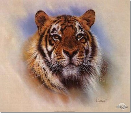 tigre 4 2