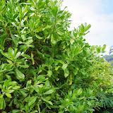 06-26-13 National Tropical Botantial Gardens - IMGP9459.JPG