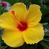 Gardening 2012 - 115_2106.JPG