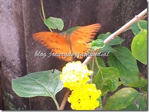 blog mundial - borboleta na lantana 3