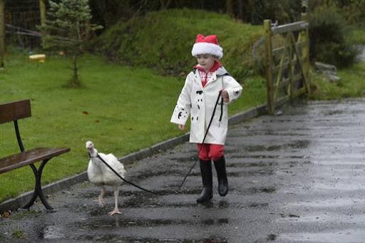 Menina irlandesa adota peru para salva-lo do forno!