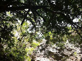 斎場御獄内の木々