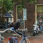 20180622_Netherlands_Olia_023.jpg