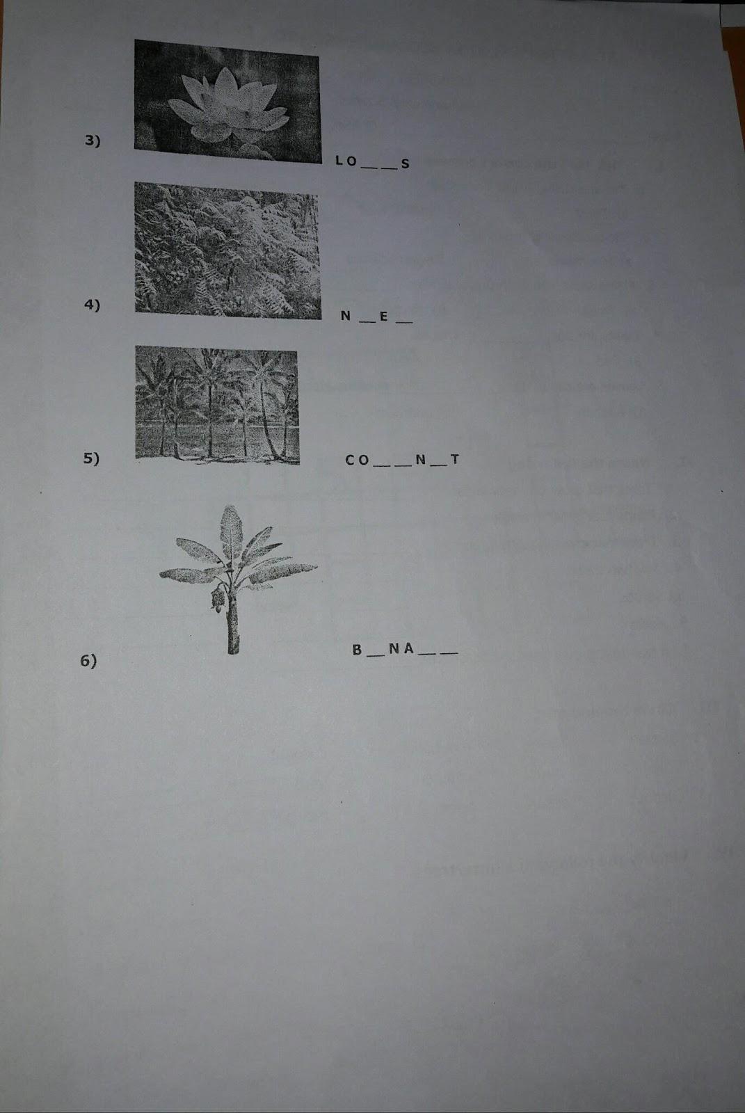 Smriti Batra Evs Revision Worksheets Class 3