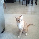 Kitteh - IMG_20110516_181920.jpg