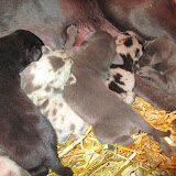 Saffy's babies @ 1 week!