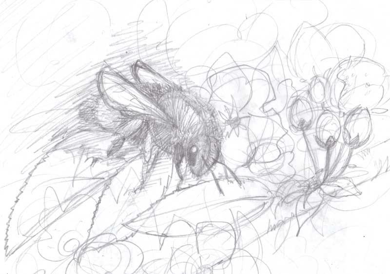 [sketch+2%5B10%5D]