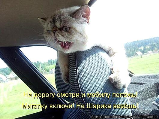 1428677893_kotomatricy-33