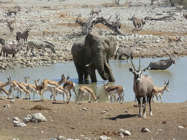 أفضل ما في أفريقيا  Best of Africa Namibia_180807114218