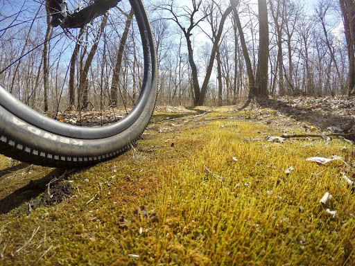 Moss on the side of the singletrack. April 7th, 2017.