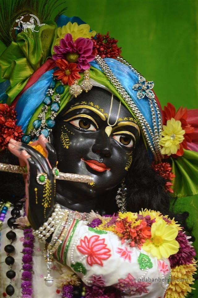 ISKCON GEV (Wada) Deity Darshan 22 Jan 2016  (3)