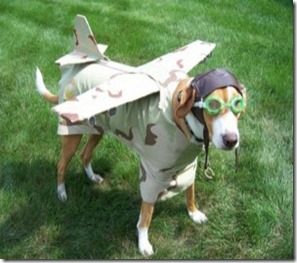 BEST-Halloween-Pet-Costumes-Funny-Animal-Costume-Ideas-for-Dogs-and-Cats-unique-holloween-top-ever-pets-19-300x225