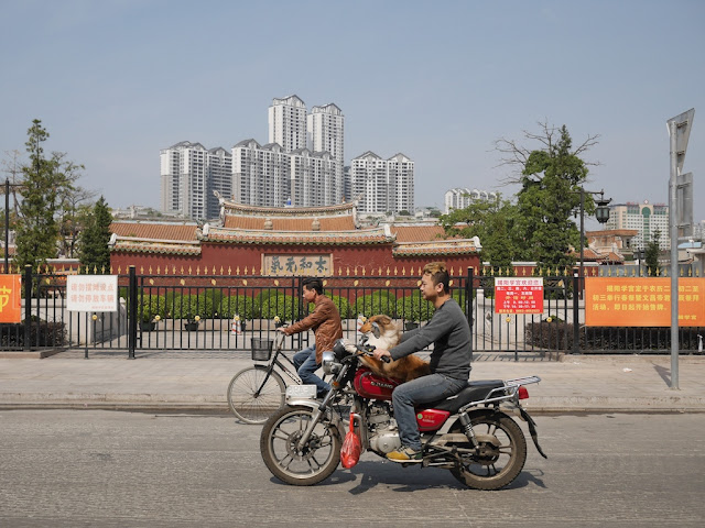 dog with a front seat view rides a motorbike with a man in Jieyang, China.
