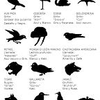 Animales de Patrulla VII