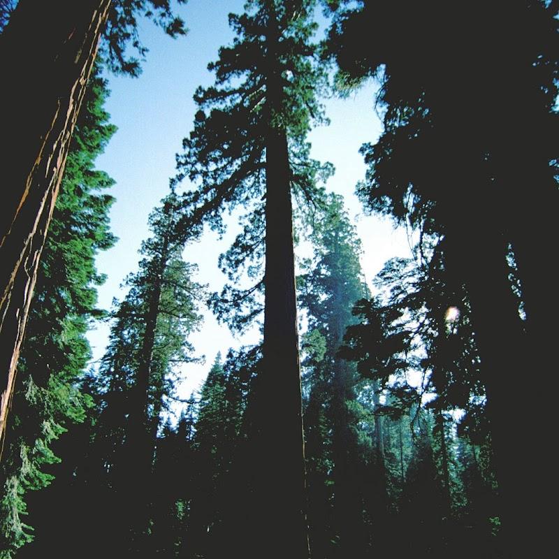 Yosemite_32.jpg