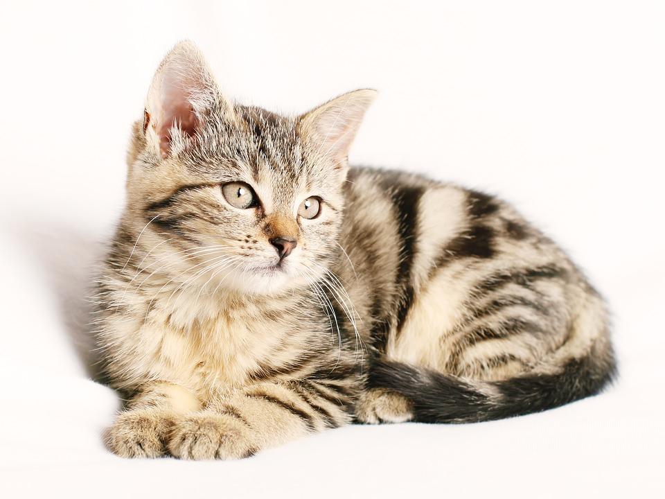 Mèo con đáng yêu chưa này