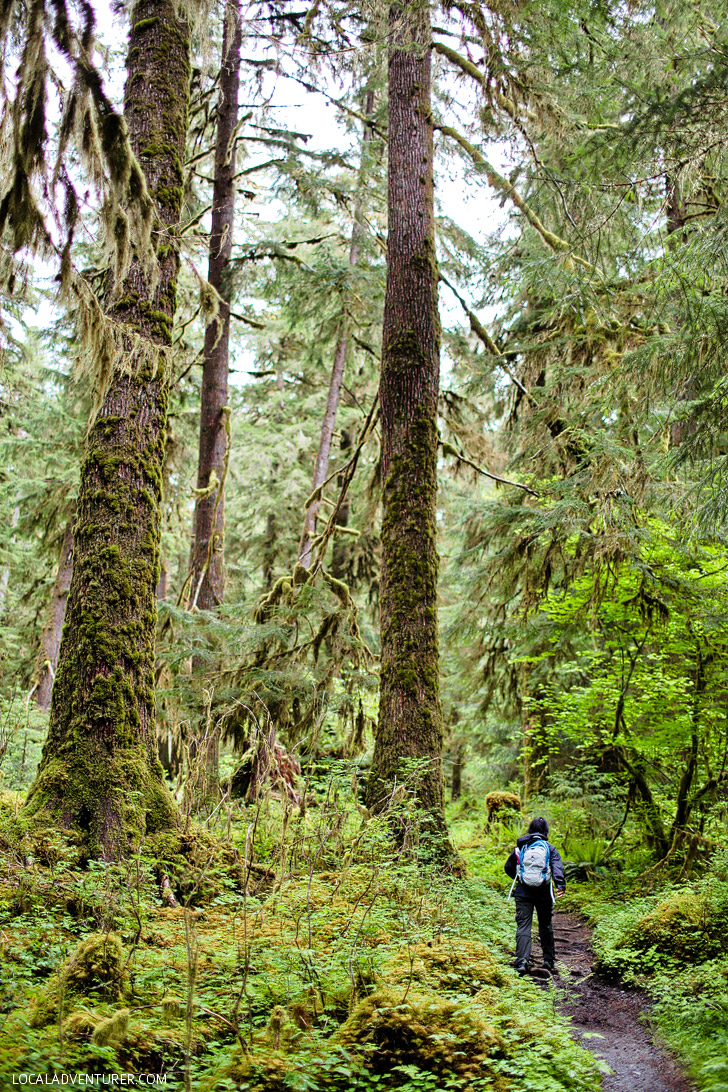 Hoh River Trail (15 Best Hikes in the US).
