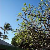 Hawaii Day 6 - 100_7597.JPG