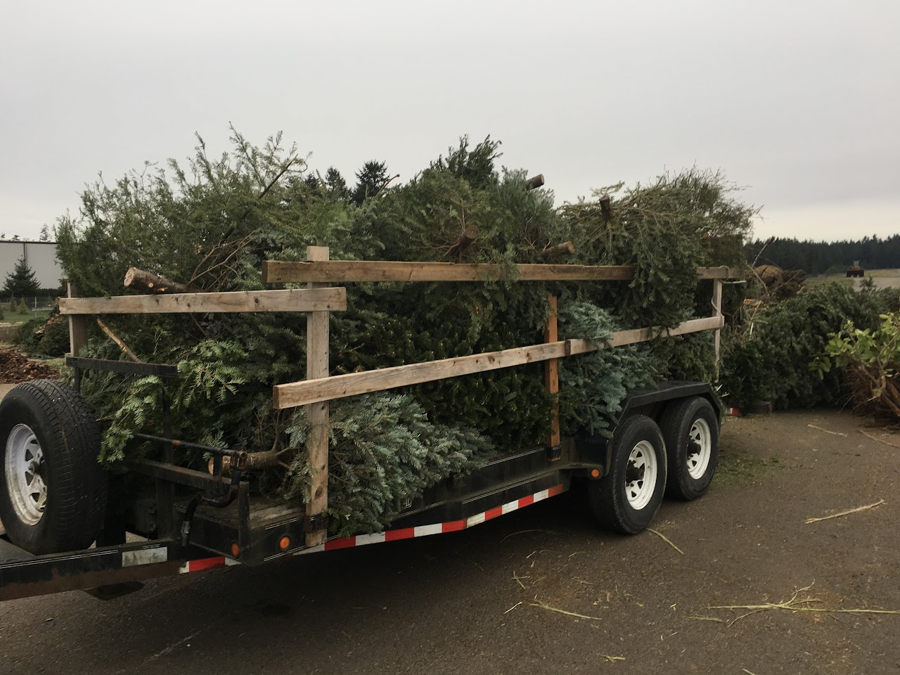 Christmas Tree Pickup - January 2017 - IMG_7004.JPG