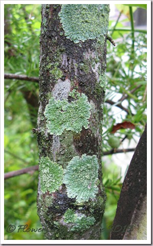 09-17-lichen-up-close4