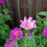 Gardening 2012 - 115_2639.JPG