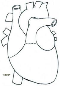 corazon-1.jpg