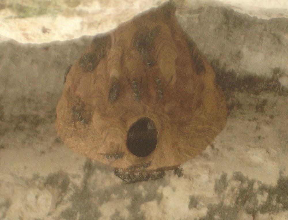 WASP hive!!!