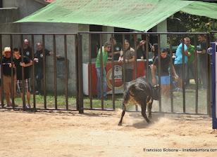 047-peña taurina linares 2014 138.JPG