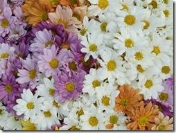 margaritas flores (63)