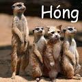 Hoàng <b>Dương Khoa</b> - photo