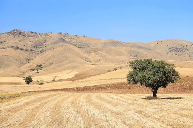Kurdystan to już więcej zieleni