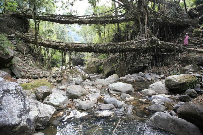 Pontes vivas de Meghalaya, na Índia