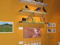 Részletek az Erdőjárók kalauza-Zemplén természeti értékeit bemutató kiállításból14.jpg