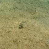 Bonaire 2011 - PICT0074.JPG