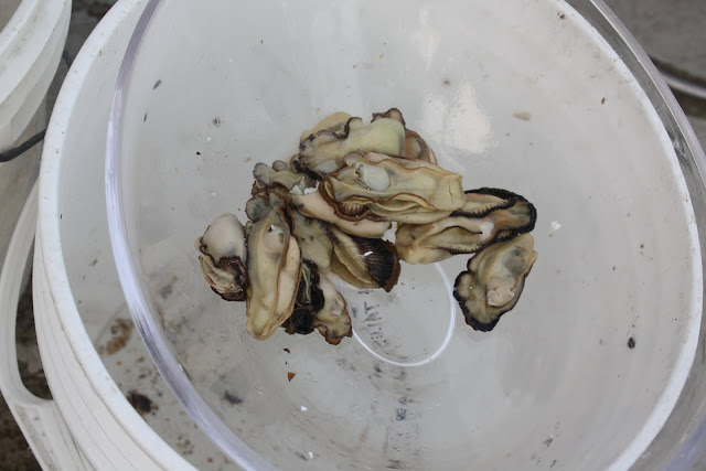 2012 Oyster Run - IMG_2936.JPG