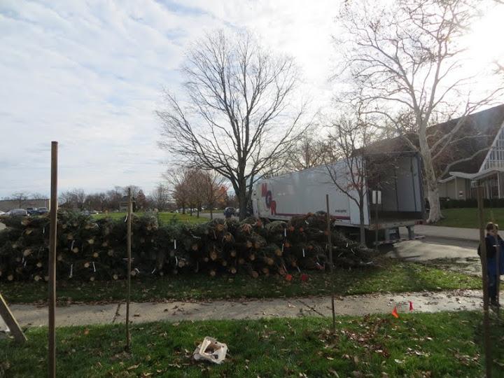 Christmas Tree Lot - IMG_1822.JPG
