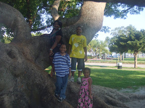 Photo: all 4 in the Kapok tree